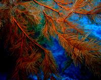 Mermaid's Christmas Tree